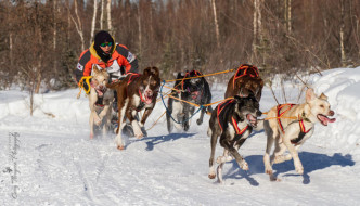 North Pole Championships :: An annual 3-day sled dog race